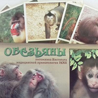 Буклеты_с_обезьянами_100руб